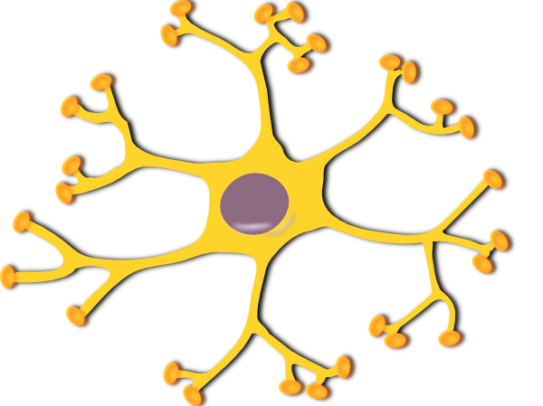Human Nerve Cell Clip Art.