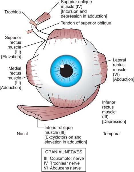 17 Best images about Eye Facts on Pinterest.