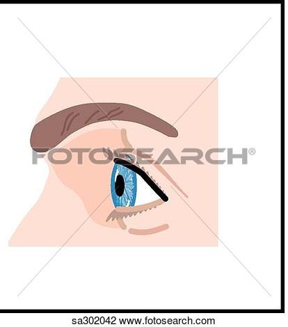 Nerves From Eye Clipart.