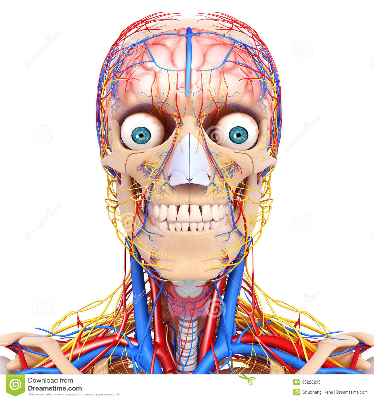 Nerves From Eye Clipart.