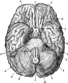 Diferentes cortes de la médula espinal vistos con microscopio.