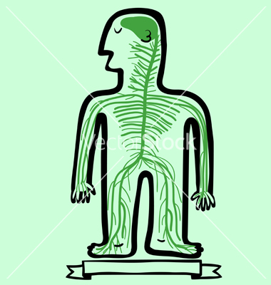Showing post & media for Cartoon human body nervous system.