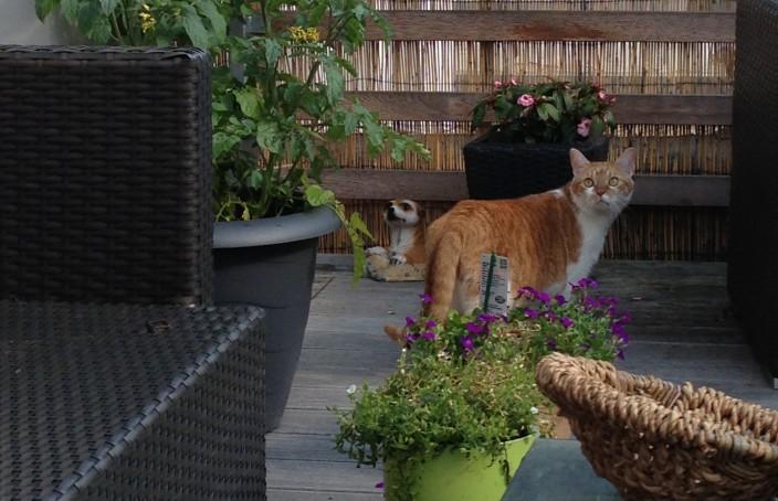 Achtung giftig! Diese Pflanzen können für eure Katze gefährlich.