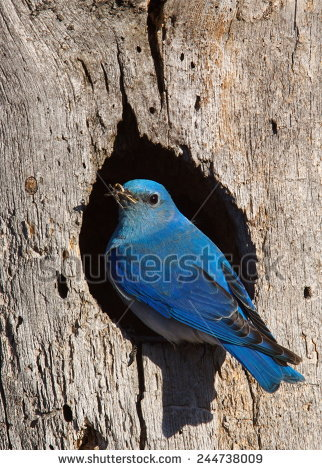 Nesting Cavity Stock Photos, Images, & Pictures.