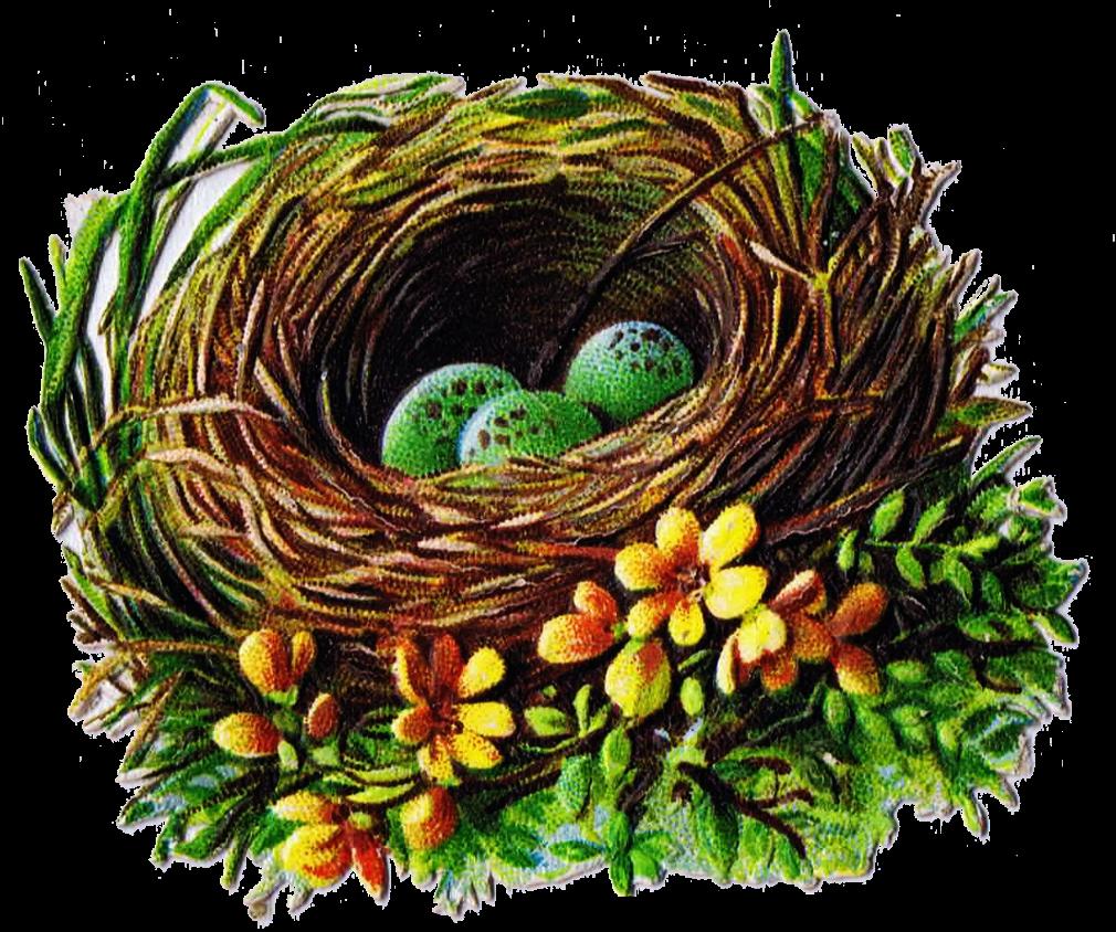 Egg In Nest Clipart.