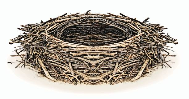 Best Bird Nest Illustrations, Royalty.