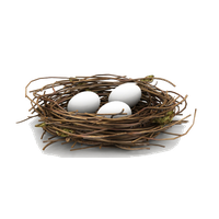 Download Nest Free PNG photo images and clipart.