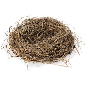 HQ Nest PNG Transparent Nest.PNG Images..