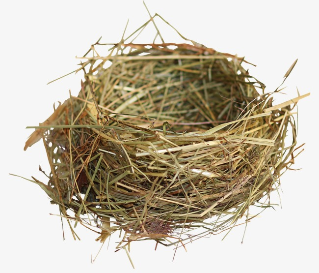 Nest Birds Nest Straw Png Image And Clipart Png Bird Nest.