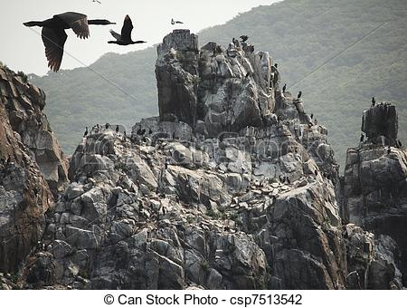 Stock Photo of Cormorants on the nesting place.