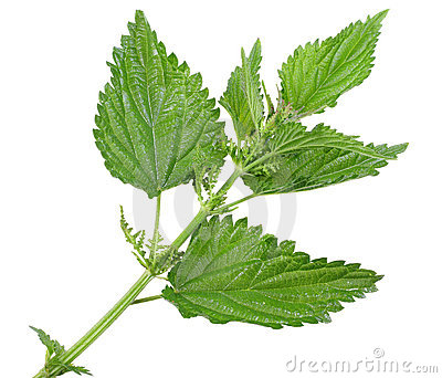 Nettle Leaves Royalty Free Stock Photos.