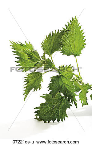 Stock Images of Stinging.