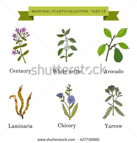 Nettle Stock Vectors, Images & Vector Art.