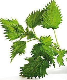 Health House Australia, Herbal Tea, Slimming Tea, Healing Tea.
