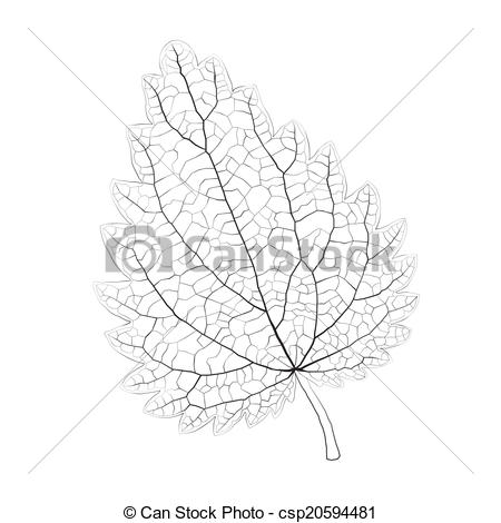 Vector of Isolated vector monochrome nettle leaf. csp20594481.