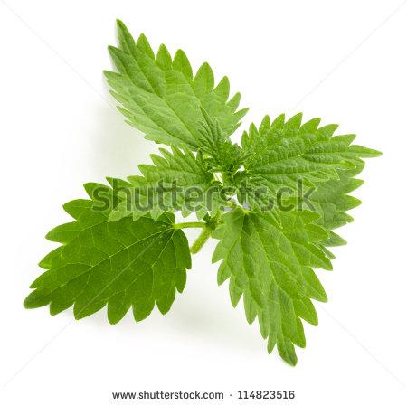 Nettle Leaf Stock Photos, Royalty.