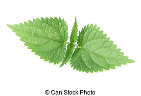 Nettle Images and Stock Photos. 3,698 Nettle photography and.