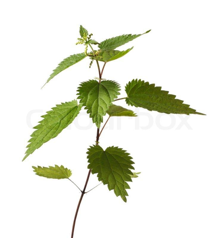 Buy Stock Photos of Plants.