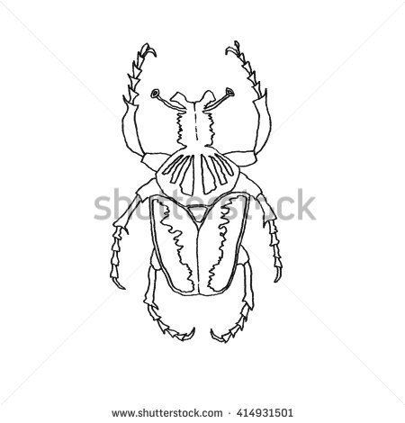 Insect Anatomy Sticker Head Human Louse Stock.