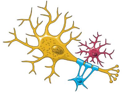 Brain Basics: The Life and Death of a Neuron.