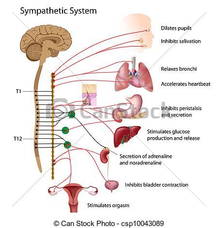 Neurology Illustrations and Clipart. 8,219 Neurology royalty free.