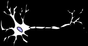 Wt Neuron Without Myelin clip art.