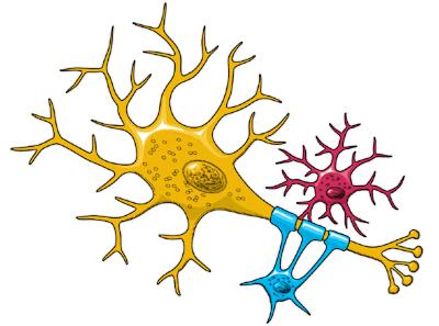 Clip Art Neurons.