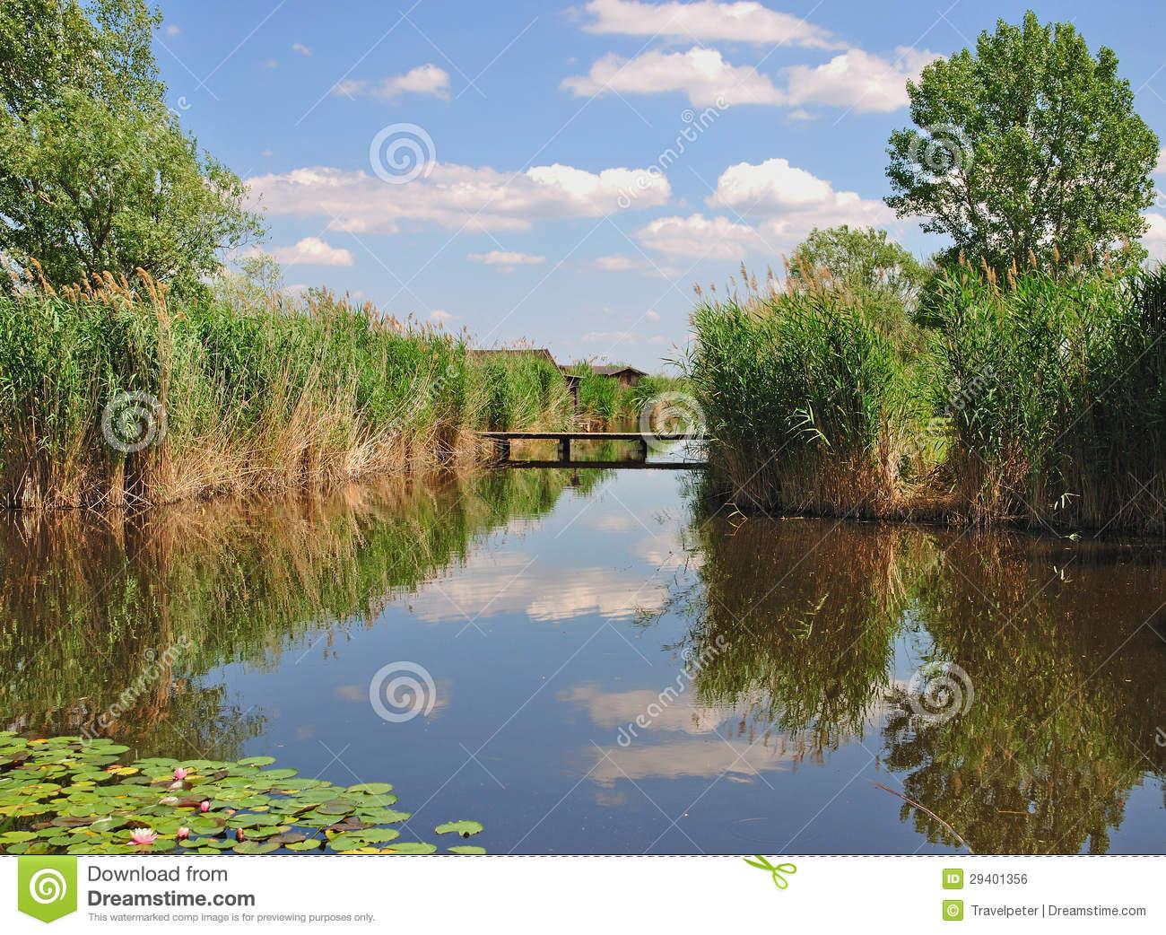 Reed Belt,Lake Neusiedler See,Austria Royalty Free Stock Image.