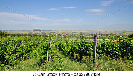Stock Photos of Vineyard,Neusiedler See,Austria.