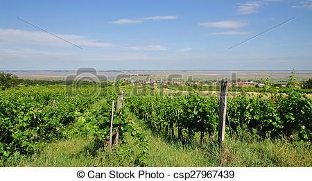 Stock Photos of Vineyard,Neusiedler See,Austria.