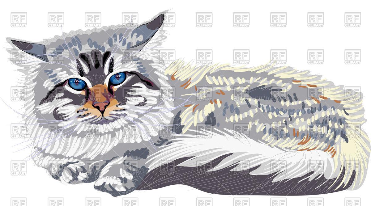Siberian cat (Neva Masquerade) with bright blue eyes Vector Image.