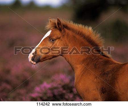 Stock Photo of horse, New.