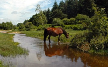 The New Forest • A Guide to the New Forest • iNewForest.