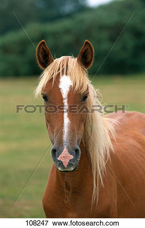 Picture of horse, New.