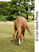 New forest pony clipart #4