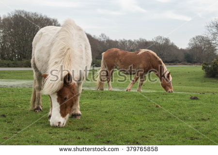 New Forest Stock Photos, Royalty.