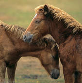 Stock Images of New Forest Pony. Free.