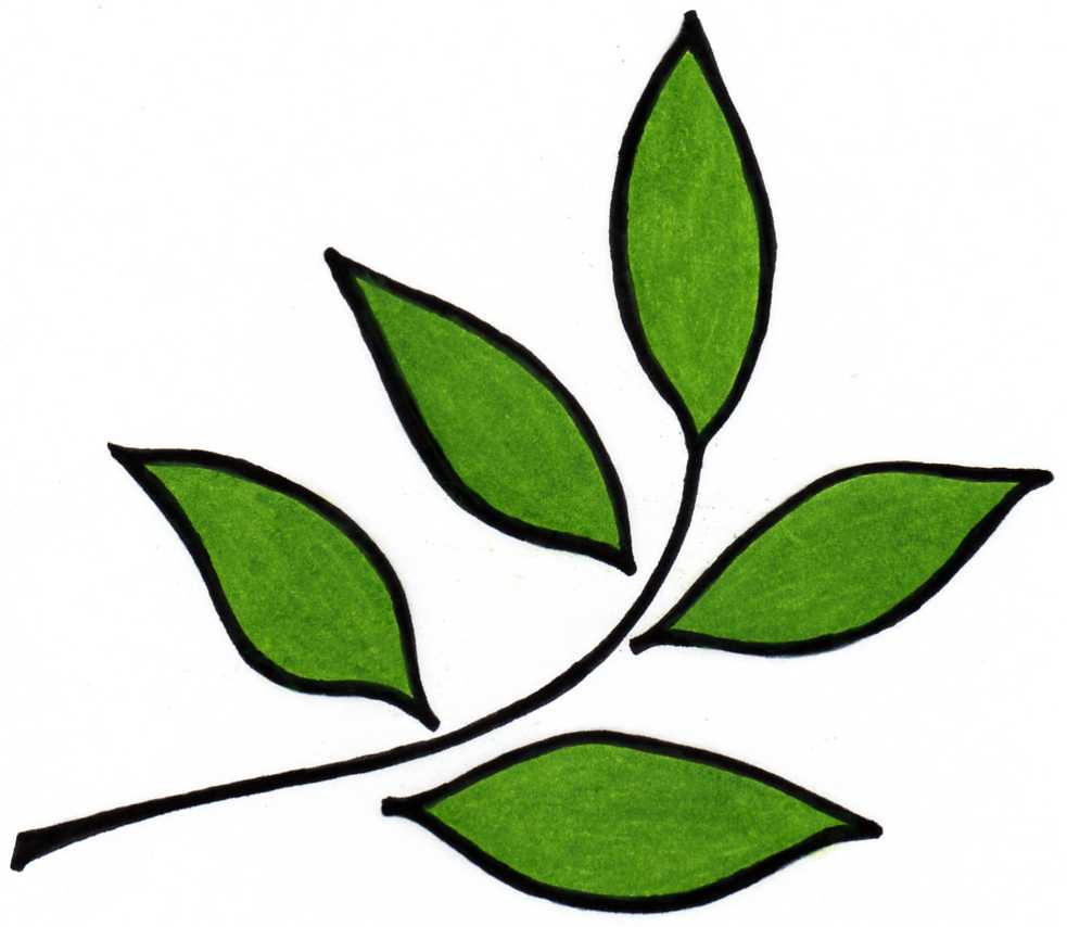Leaf Design Clipart.