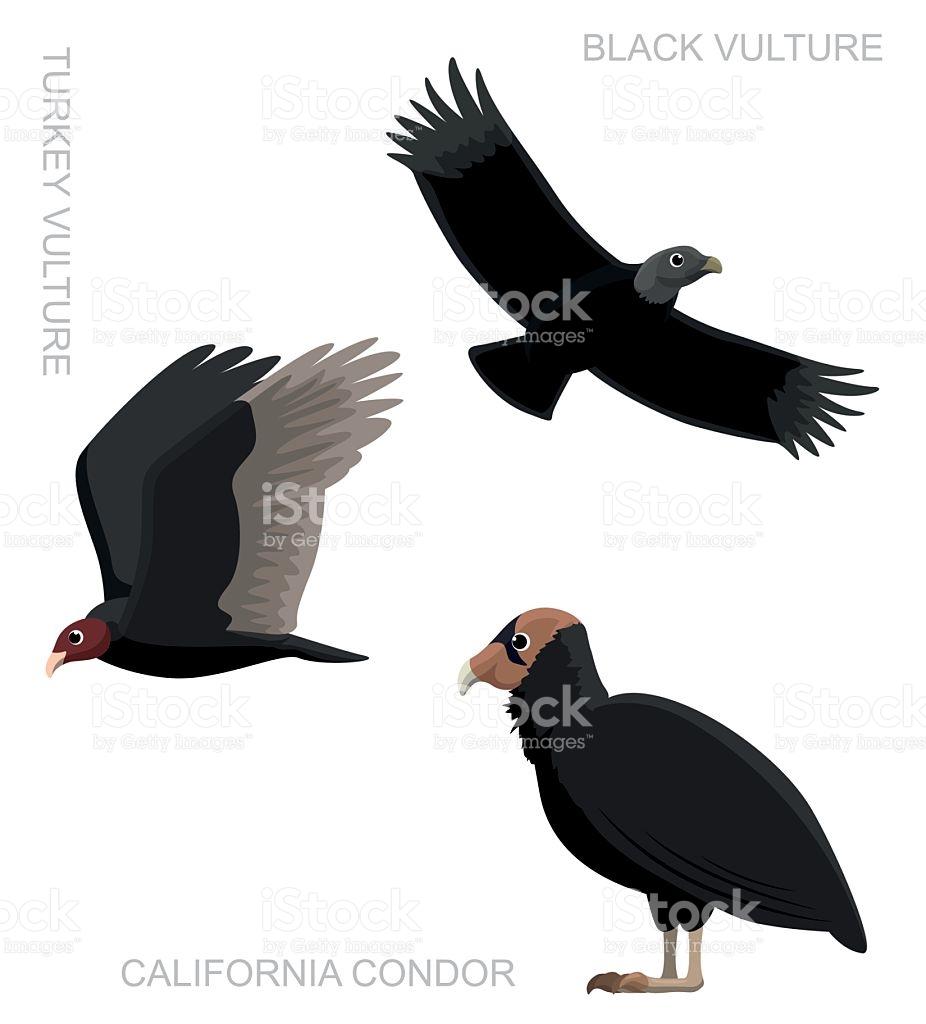 Bird New World Vulture Set Cartoon Vector Illustration stock.
