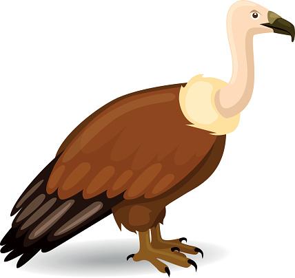 Vulture Vector.