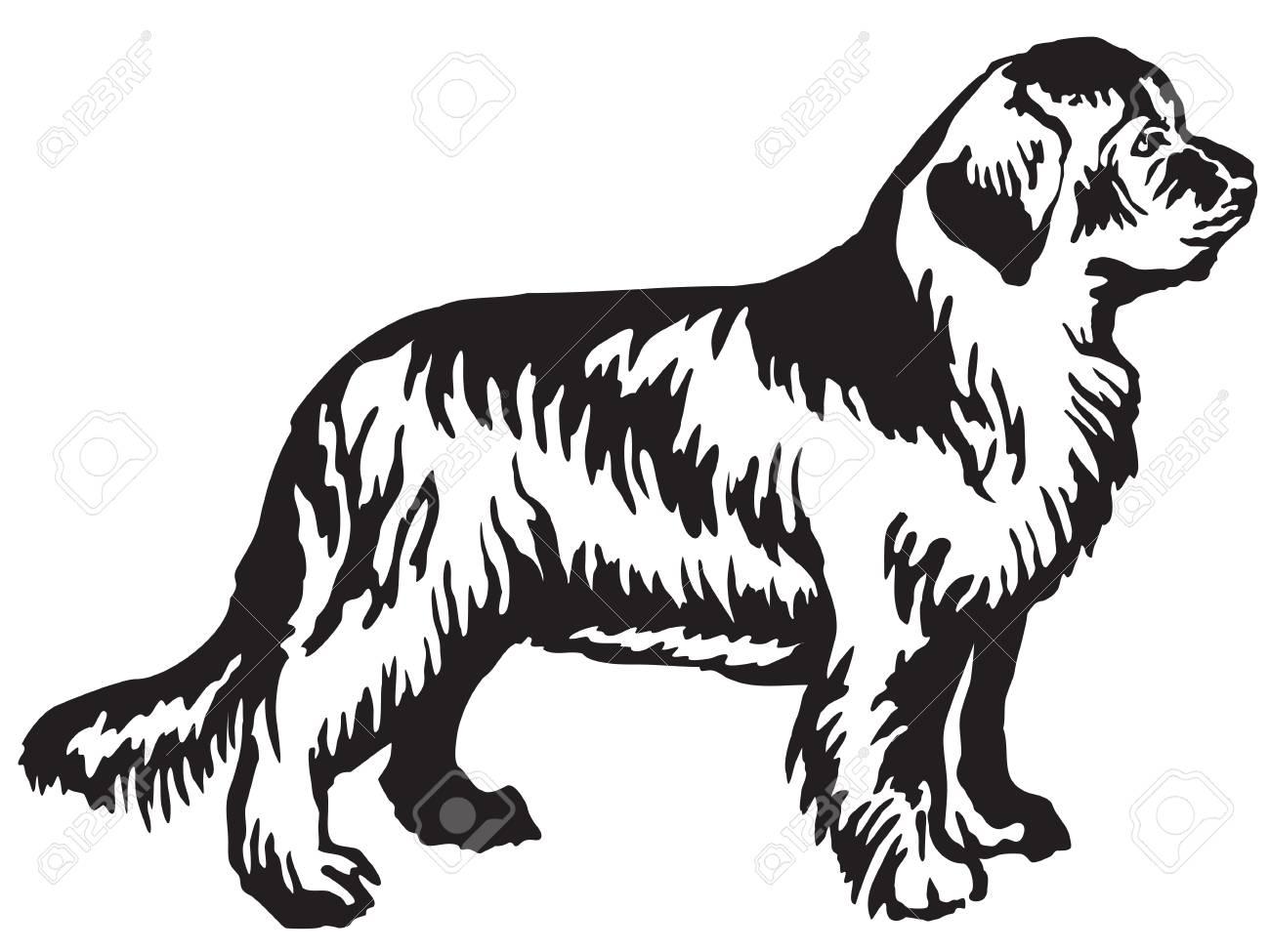 Decorative portrait of standing in profile Newfoundland dog,...