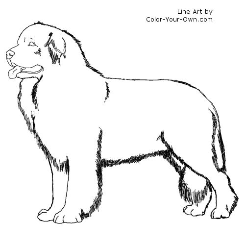 Newfoundland Dog Coloring Page.