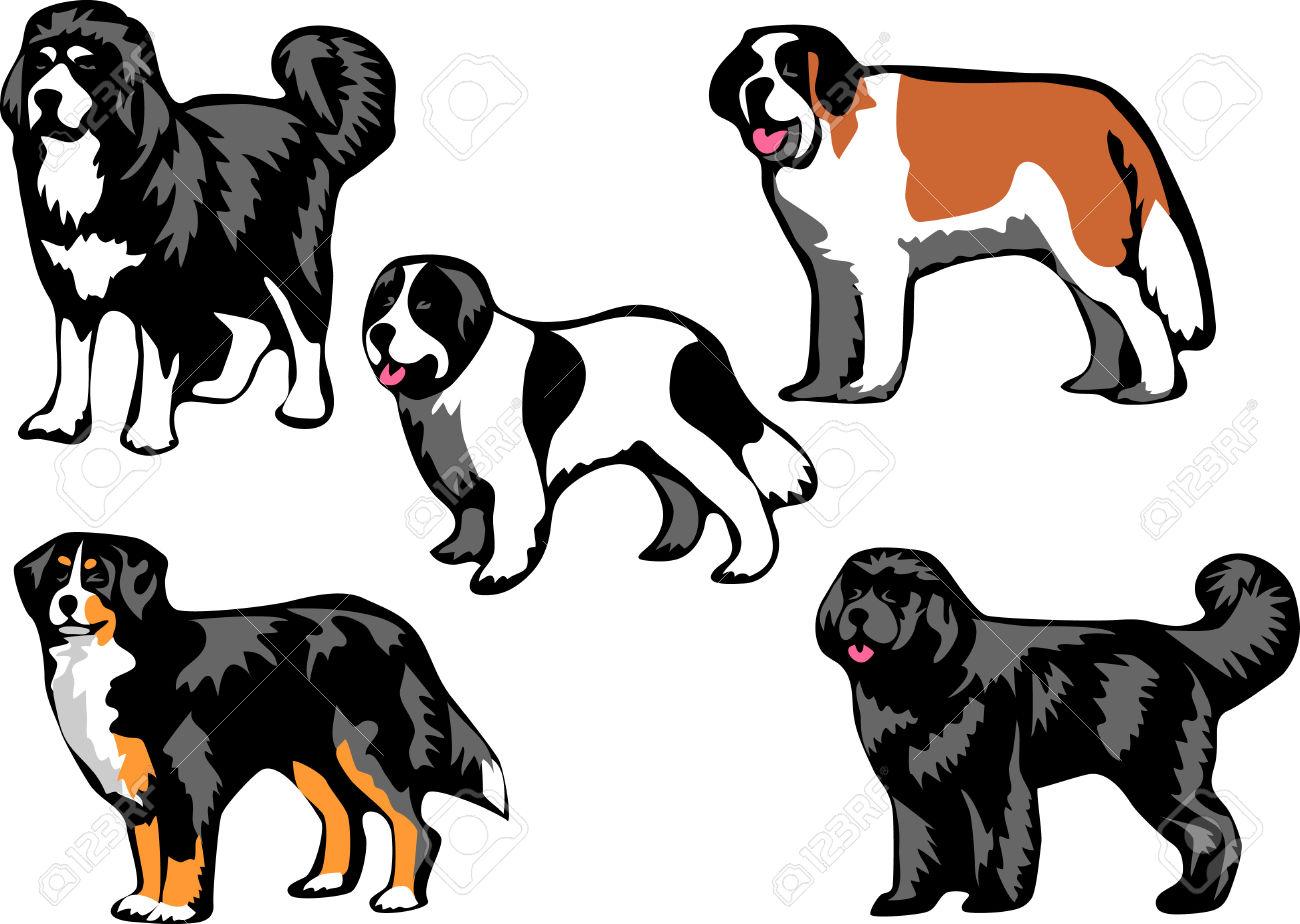 Newfoundland dog clipart.