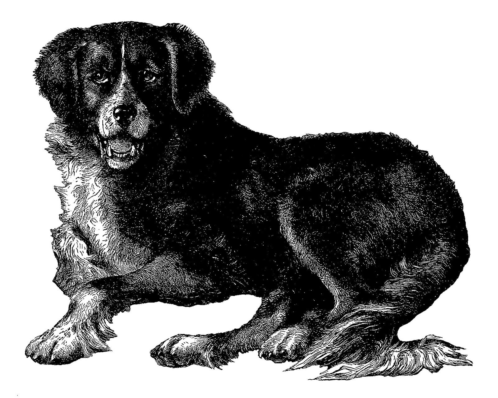 Newfoundland Dog Clipart Free.