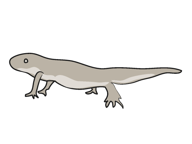 Newt clipart - Clipground
