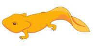 Free Amphibian Clipart.