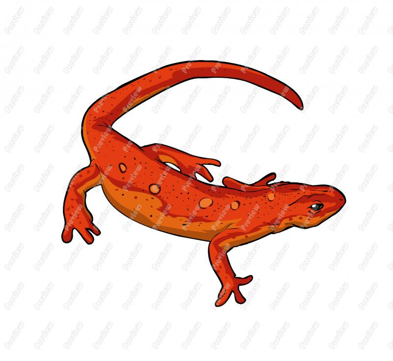 Newt clipart 20 free Cliparts | Download images on ...