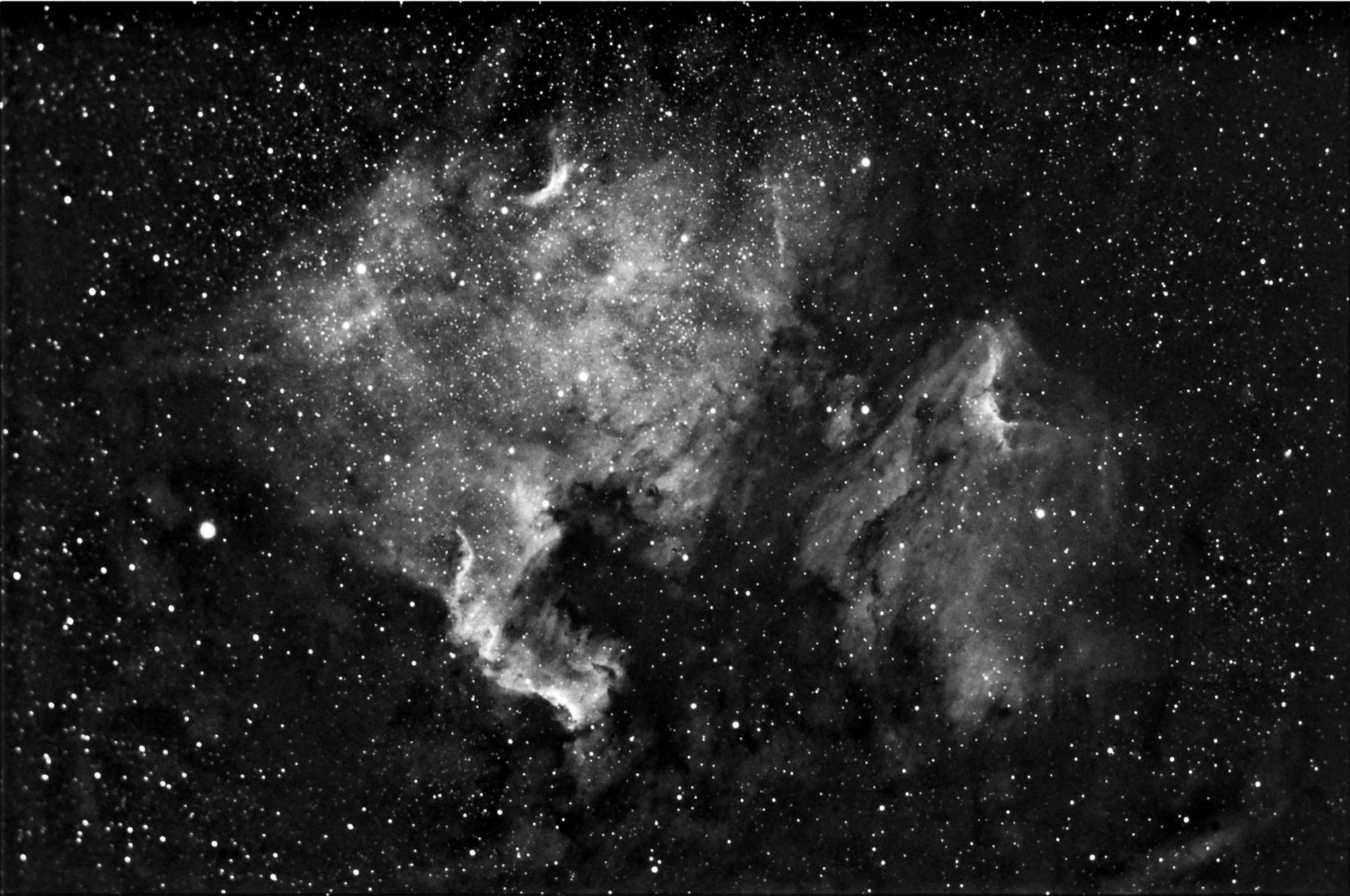 Cygnus.
