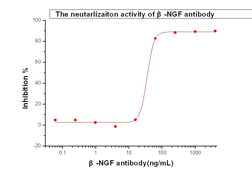 NGF / NGFB Neutralizing Antibody.