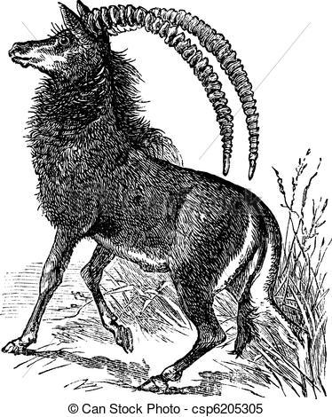 Clipart Vector of Sable antelope, aigocerus niger or hippotragus.